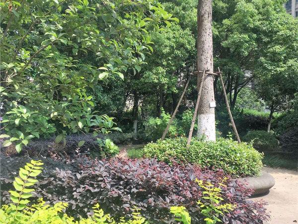 萬達西地戶型圖實景圖片