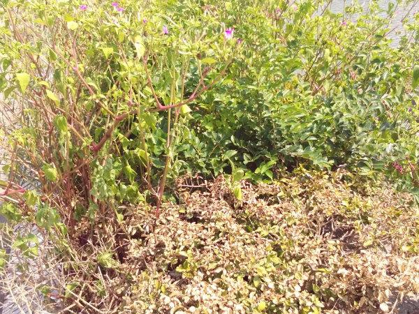 盛隆花园(东区)户型图实景图片
