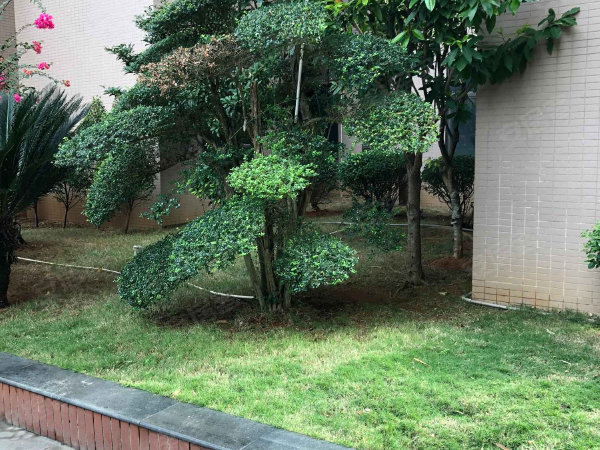 国贸城市花园户型图实景图片