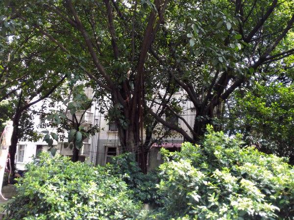 南方歌舞团宿舍户型图实景图片