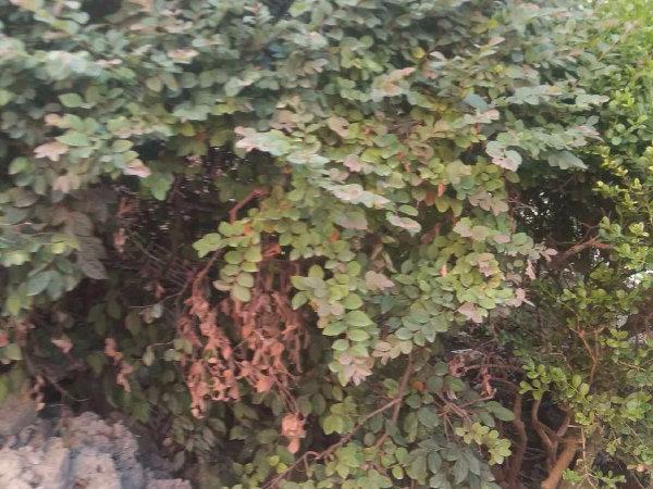 长江花园户型图实景图片