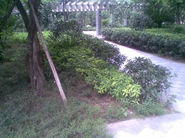 金地花园楼盘现场环境