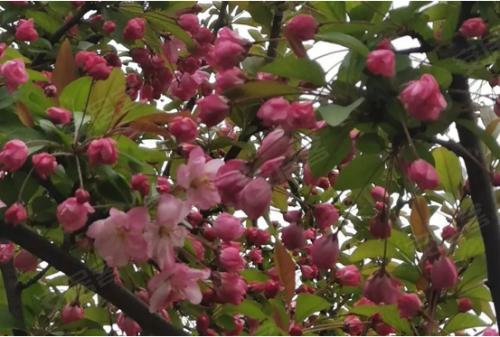 春天正美好丨#隨手拍春意#一起欣賞業主鏡頭里面的幸福